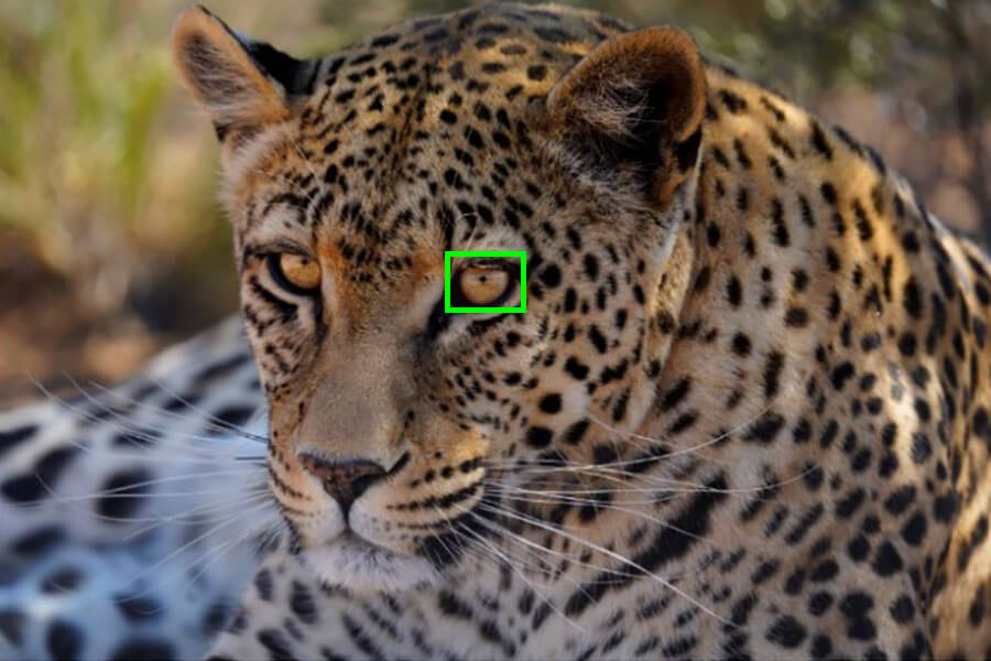 Example of Eye AF and tracking situation | Wildlife