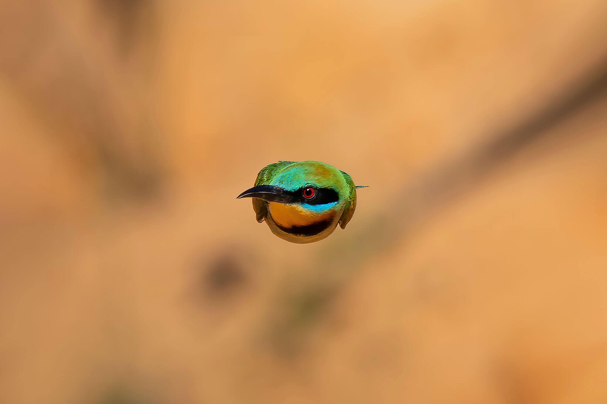 Photo of bird in flight by Michael Jury