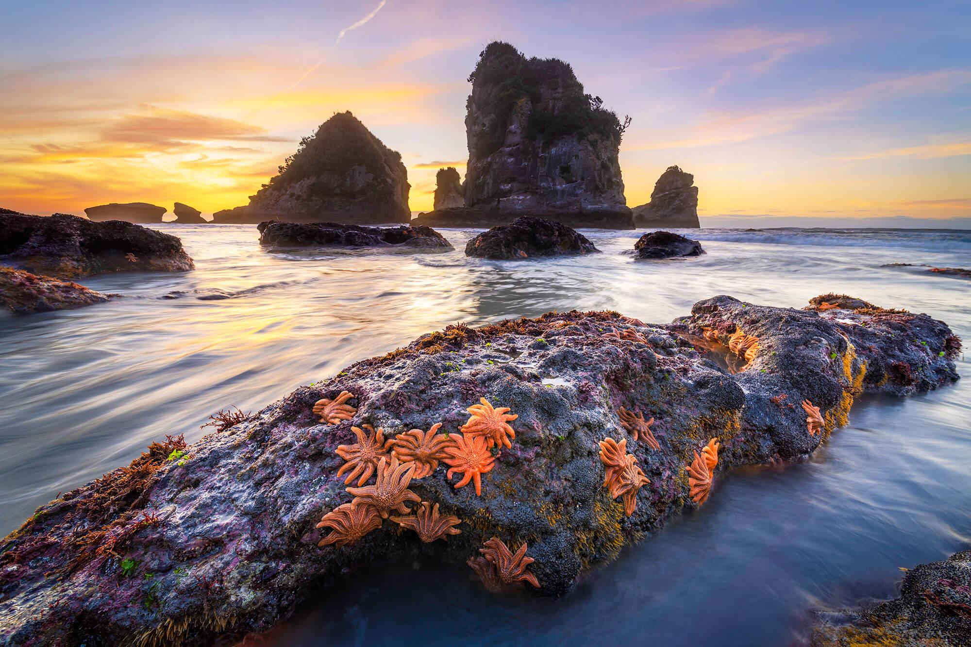 Photo of starfish on rocks along coast by Luke Tscharke