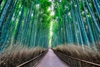 Arashiyama Bamboo Forest - Japan